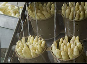 La Catedral de Navarra ends the asparagus campaign today